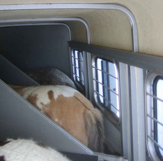 The first step to a safe trip is a successful loading of the horses. Load the horse most likely to hesitate to load last- they'll likely want to join their herdmates.
