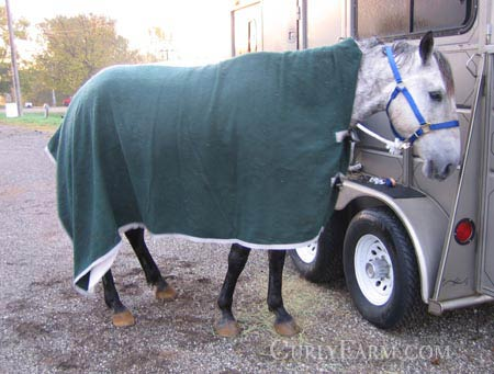 horse wearing a large cooler