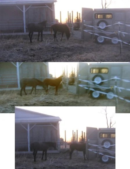 temporary fencing is a great way to let young horses get used to a trailer and self loading without allowing them access to damage the body of the trailer