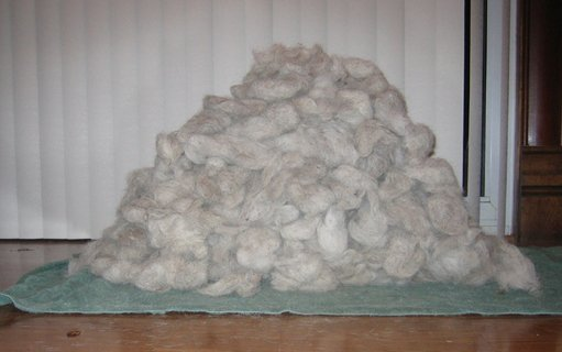 curly horse fiber
