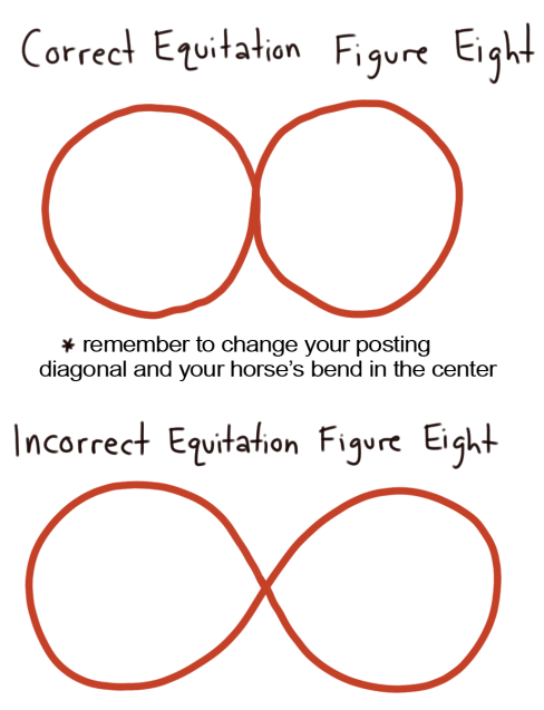 how to correctly ride a figure eight pattern in a horse shoe equitation class