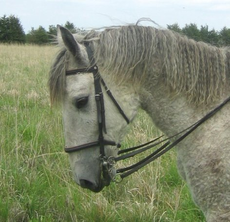 How to hold double reins when riding with a pelham bit