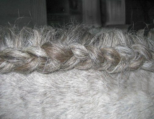 Step by step instructions to braid a mane into a running braid