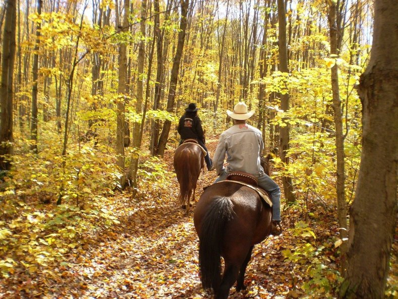 Trail riding is an excellent wait to build trust between horse and rider and change up a training routine