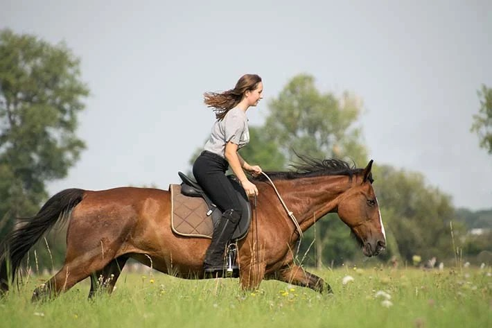horses can help meet some emotional needs for girls, leading to better body image