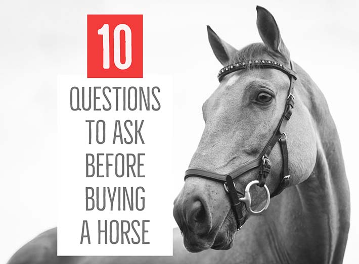 10 questions to ask someone selling a horse