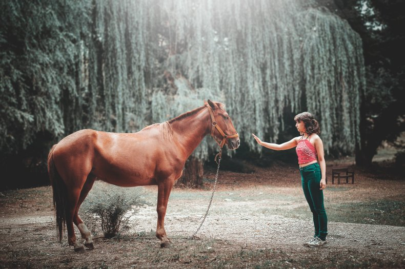 A horse that is easy to handle when not being ridden makes life easier for everyone