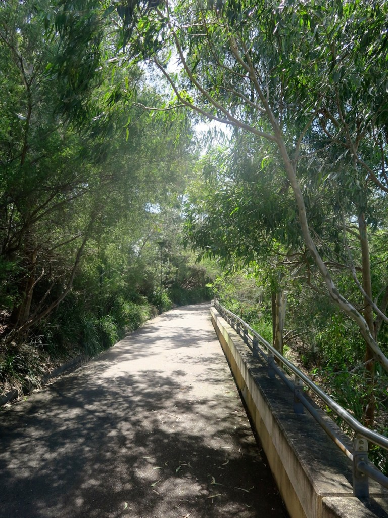 Walking path in The Domain Sydney |curlytraveller.com