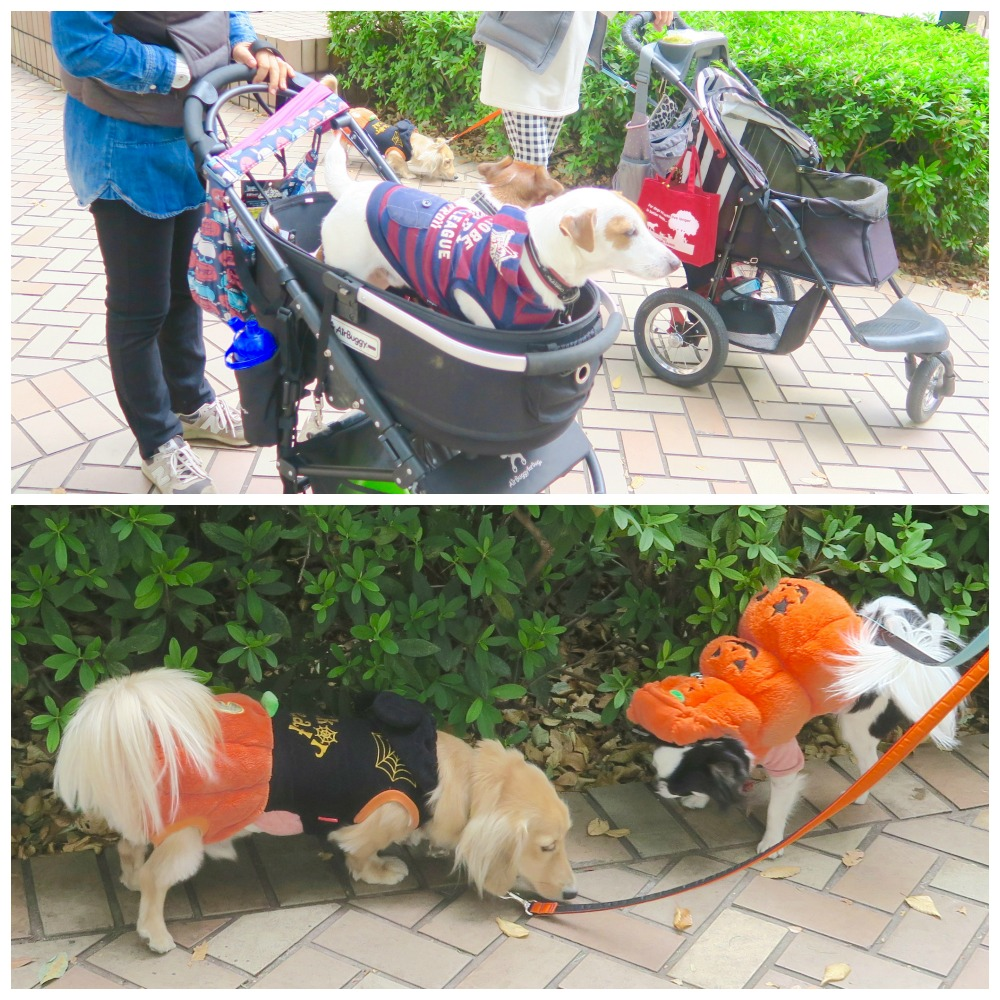 Dogs in stroller and Halloween outfits in Tokyo |curlytraveller.com