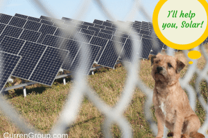 3 Ways the Underdog Can Wage Your Solar Marketing Campaign