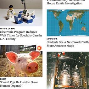 KQED.org screenshot with pig photo thumbnail