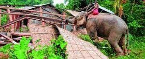 Assam forest dept deploys excavators to evict illegal encroachers from Amchang Wildlife Sanctuary