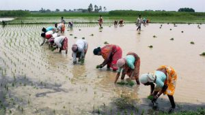 Nabard plans to almost double balancesheet to Rs 7 trillion in 5 years