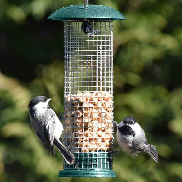 Woodpecker Feeders You Should Consider Buying