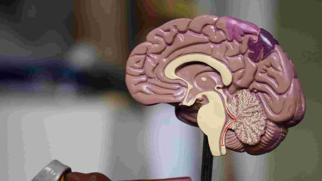 horror movies and its impact on human brain
