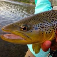 Missouri River Fishing Report 7/12/13