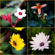 flower-col-3