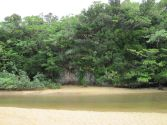 Fukido River, 吹通川, マングローブ, mangrove, ヒルギ, Rhizophora, tropical island, Tropeninsel, Ishigaki, 石垣島, Okinawa, 沖縄県, Japan