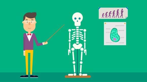 Cursos e Empregos esqueleto-enem-580x326 Enem 2016 Inscrições e Data das Provas