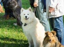 cursos gratis de adiestramiento canino