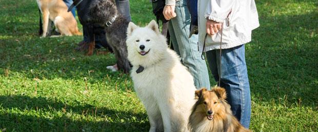 cursos gratis de adiestramiento canino para educar a tu perro