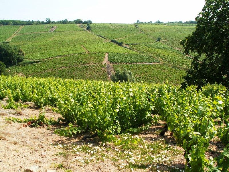 wijnlanden en wijnstreken