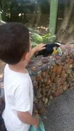 zoo_tucanocarinho