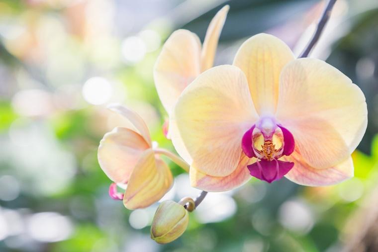orchidee verzorgingstips 1 - Home | Orchidee verzorgingstips