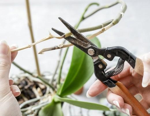 orchidee verzorgingstips