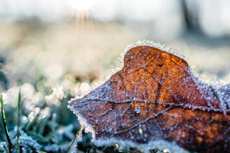 tuin winterklaar maken tips 2 - Home | Tips om je tuin winterklaar te maken