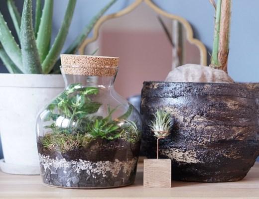 planten terrarium/ecosysteem maken DIY