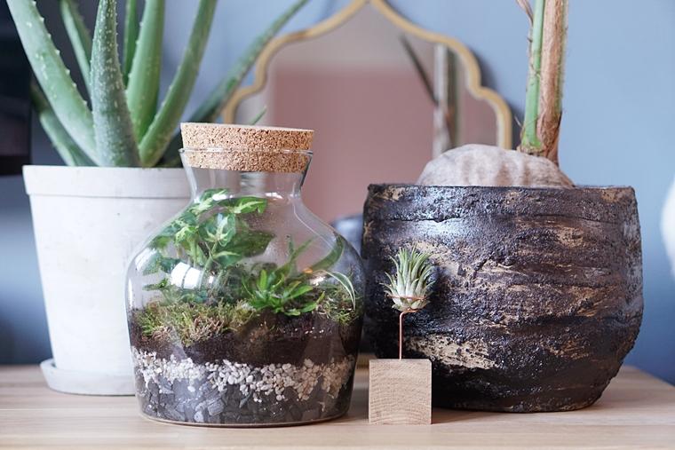 planten terrarium ecosysteem maken diy 3 - DIY | Planten terrarium/ecosysteem maken