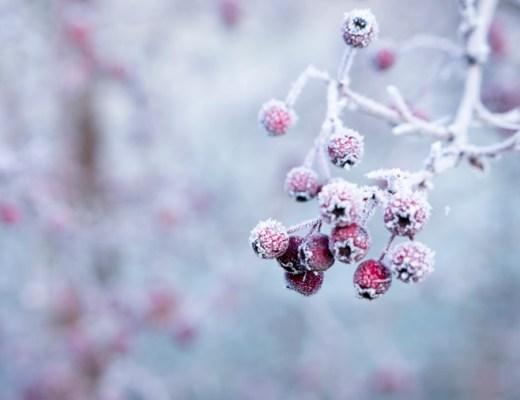 tuin winter winterklaar winterproof maken tips onderhoud en aankleding