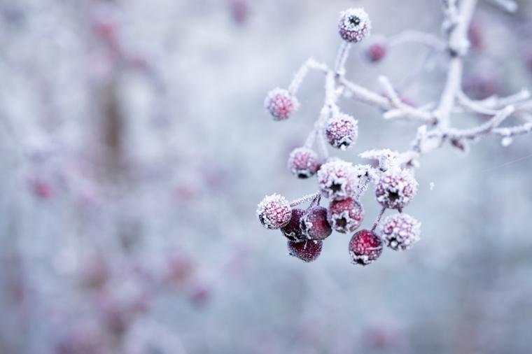 tuin winterklaar tips 1 - Home | Tips om je tuin winterklaar te maken