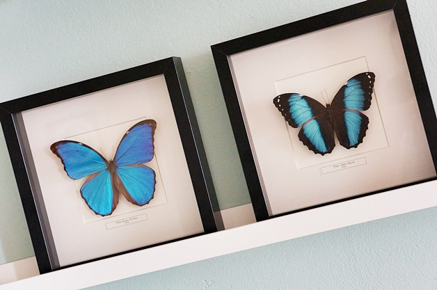 opgezette vlinders 2 - Random Things & New In's #2