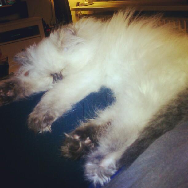 sassy1 - Meet Sassy!