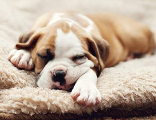 tips goede nachtrust 7 - Tips voor een goede nachtrust #1