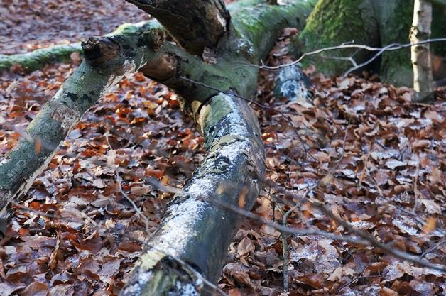 walkinthepark11 - Een winterse wandeling in Park Sonsbeek