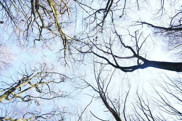 walkinthepark17 - Een winterse wandeling in Park Sonsbeek
