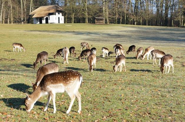 walkinthepark2 - Een winterse wandeling in Park Sonsbeek