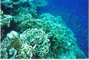 Double Barrier Reef in Bohol