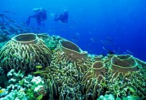 Tubbataha Reef Marine Park in Puerto Princesa