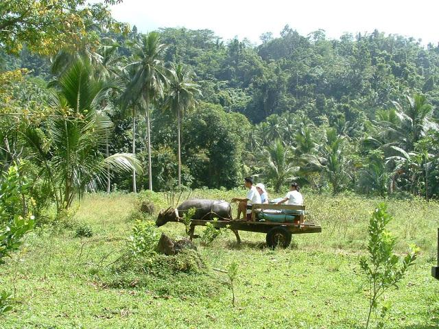 Bondong Jungle, the Best Jungle Trek in Puerto Galera