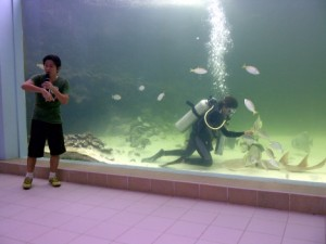 Green Connection Aquarium in Kota Kinabalu
