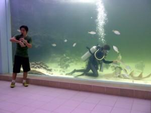 Green Connection Aquarium in Kota Kinabalu