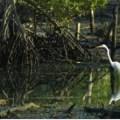 Kota Kinabalu City Bird Sanctuary in Kota Kinabalu