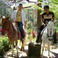 horseback riding activity