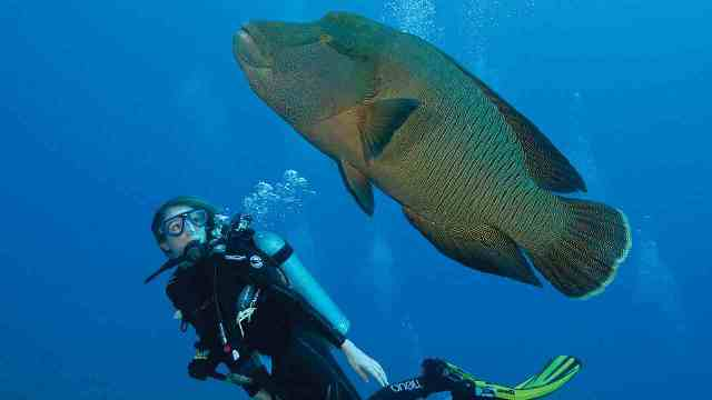 diving, scuba diving, maldives