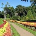botanical, garden, sri lanka