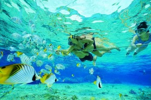 snorkeling, water activity, samui